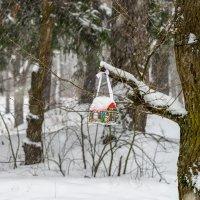 В лесу :: Юрий Бичеров