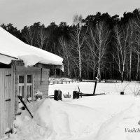 Вот и мой лес... :: Алексей Васильченко