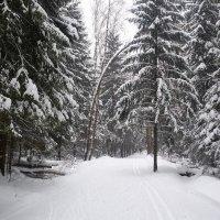 Зимний лес :: Ярослава Машукова