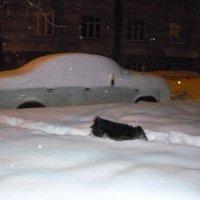 Купание в снегу :: Mary Коллар