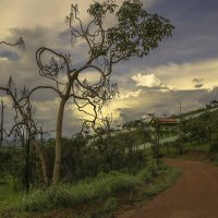 Бразильские деревья :: Сергей Глотов