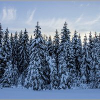 Зимний лес :: Иван Клещин