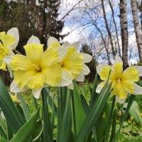 Всё. Надоело. Весна! :: Светлана Лысенко