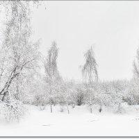 Зимнее покрывало :: Ирина Князева