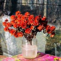 Цветы во льду... :: vcherkun