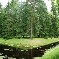 П-образный пруд в Верхнем парке :: Елена Павлова (Смолова)