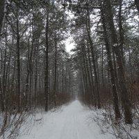 Загадочный зимний лес... :: Тамара (st.tamara)