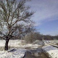 чуть-чуть зимы :: Валентина Лексикова