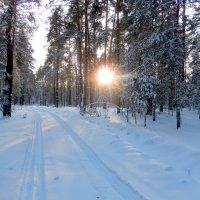 Зимний лес , он из сказок и чудес . :: Hаталья Беклова