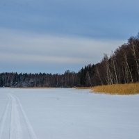 Подмосковье зимой :: Елена Решетникова