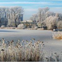 Замёрзший пруд. :: Валерия Комова