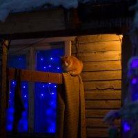 Праздничный кот :: Евгения Л
