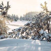 Зимний вечер... :: Пётр(Флайсмит) Майер