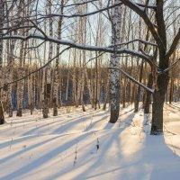 Зимний лес :: Любовь Потеряхина