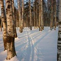Лыжня :: Елена Грошева