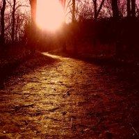 Закат в лесу :: Вячеслав Емельянов