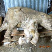 Мамонтёнок Люба :: Tata Wolf