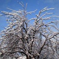 Красота снежного дня :: Татьяна Пальчикова