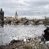 Белые крылья :: Мария Кондрашова