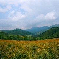 Алтайские просторы на плёнке :: Kate Sparrow