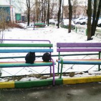 Две подружки сидят, во все стороны глядят... :: Ольга Кривых