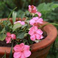Цветы :: Владимир К.