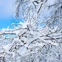 Эх, снег, снежок... :: Елена Васильева