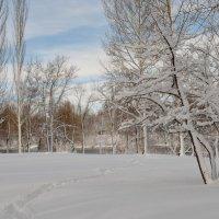 Первый снег :: Татьяна