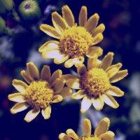Цветы :: Вячеслав Емельянов