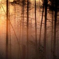 Солнце взойдёт.... :: Юрий Цыплятников