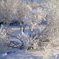 Зима :: Ната Волга