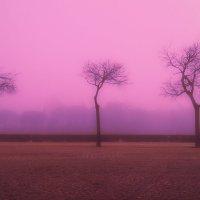 Туманное утро. :: aWa