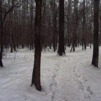 IMG_0283 - Продолжаю учиться снимать не цветное :: Андрей Лукьянов