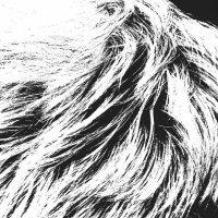 Волосы :: Николай Филоненко