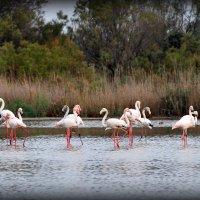 Розовые фламинго :: Наталья Волкова