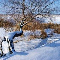 Что там за далью снеговой?.. :: Лесо-Вед (Баранов)