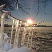 Мороз и солнце! :: Ирина Олехнович