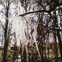 Серебристая морковка, прицепилась к крыше ловко, уцепилась за карниз, и растёт зимою вниз. :: Ольга Кривых