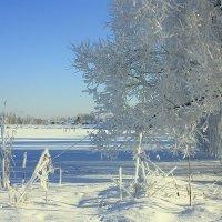 Зимний сон :: Ирина Подольская