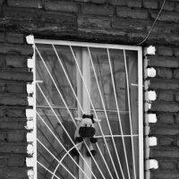 Во дворе :: Тамара Гереева
