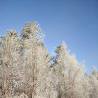 Белый-белый лес :: Ольга