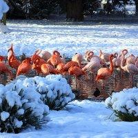 Среди снегов :: Alexander Andronik