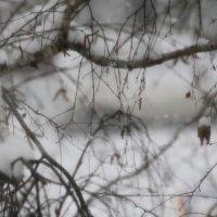 Падает  снег... :: Валерия  Полещикова