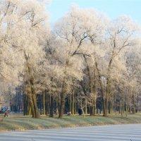 красивый зимний день :: Елена