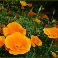Оранжевые тарелочки :: Лидия (naum.lidiya)