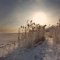 Мороз...лишь шелест камыша... :: Александр | Матвей БЕЛЫЙ