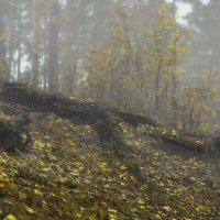 из тумана :: Елена Лагода