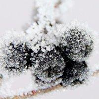 Морозное кружево :: Ирина Фирсова