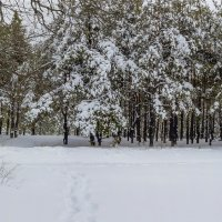 Зимний лес :: Юрий Стародубцев