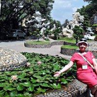 Цветы на воде :: Наталья